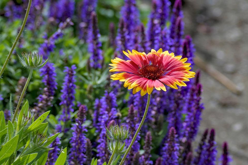New York poistomyynti myöhemmin Huopa Värikäs Luonnollinen - Ilmainen valokuva Pixabayssa