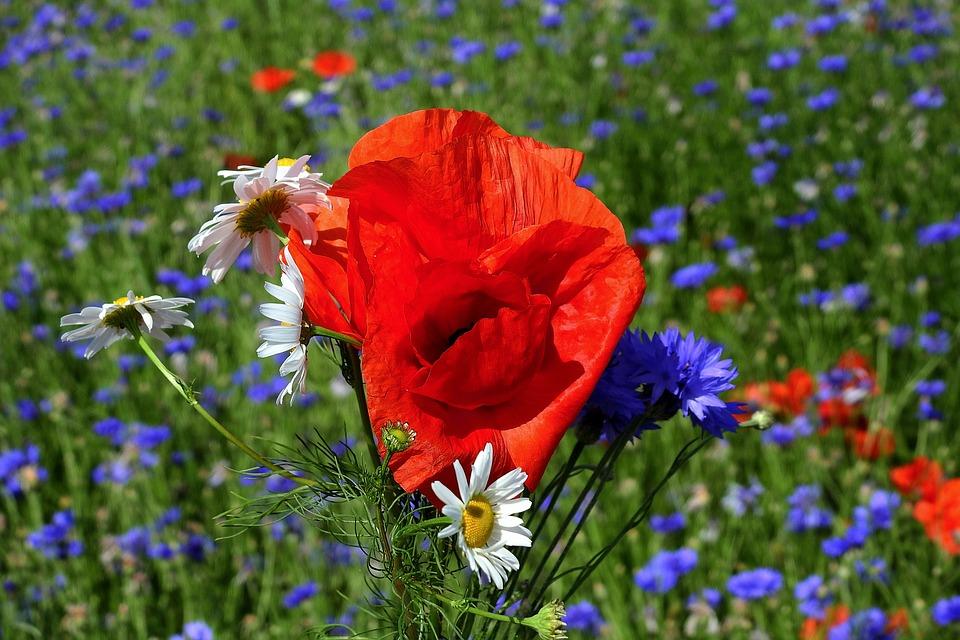 Campo Flores Paisagem Foto Gratuita No Pixabay