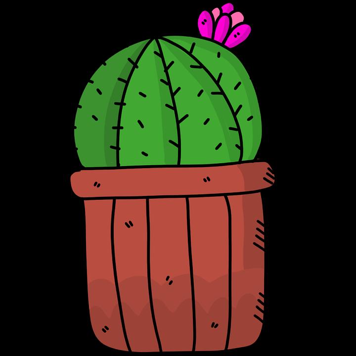 Cactus Succulent Succulents - Free image on Pixabay
