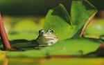 żaba, woda żaba, żaba oczy