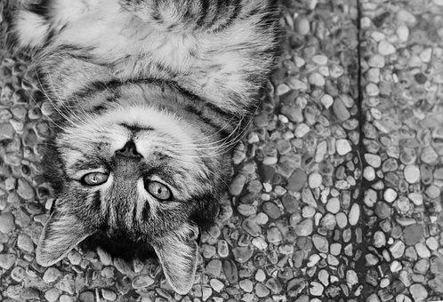 Cat, Satisfied, Lying, Ground, Animal