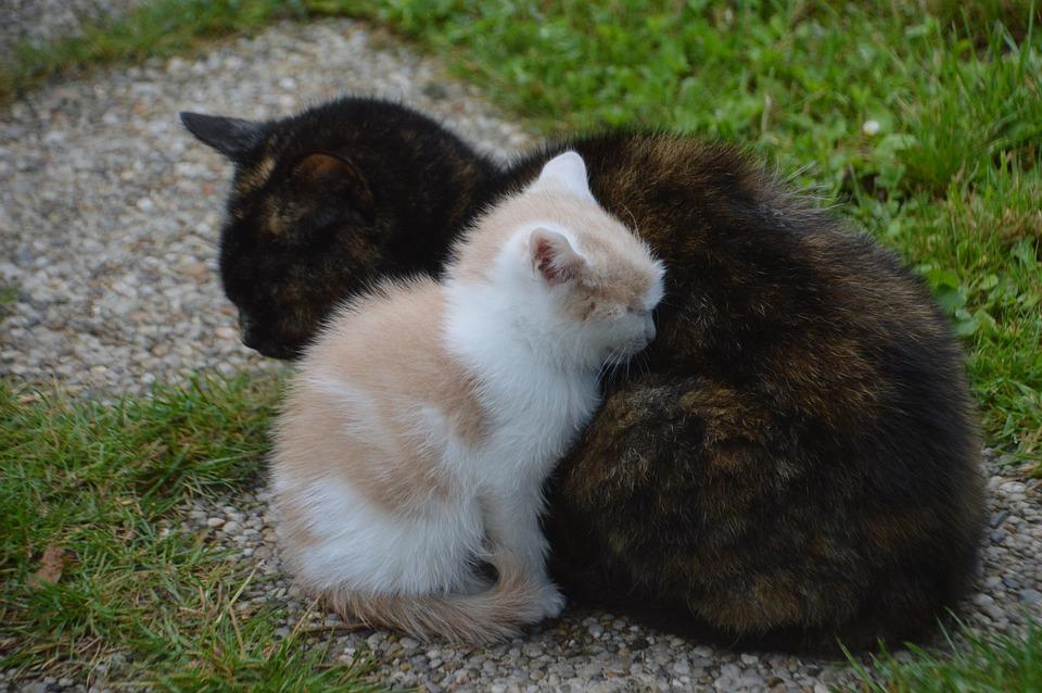 Velká maminka kočička com