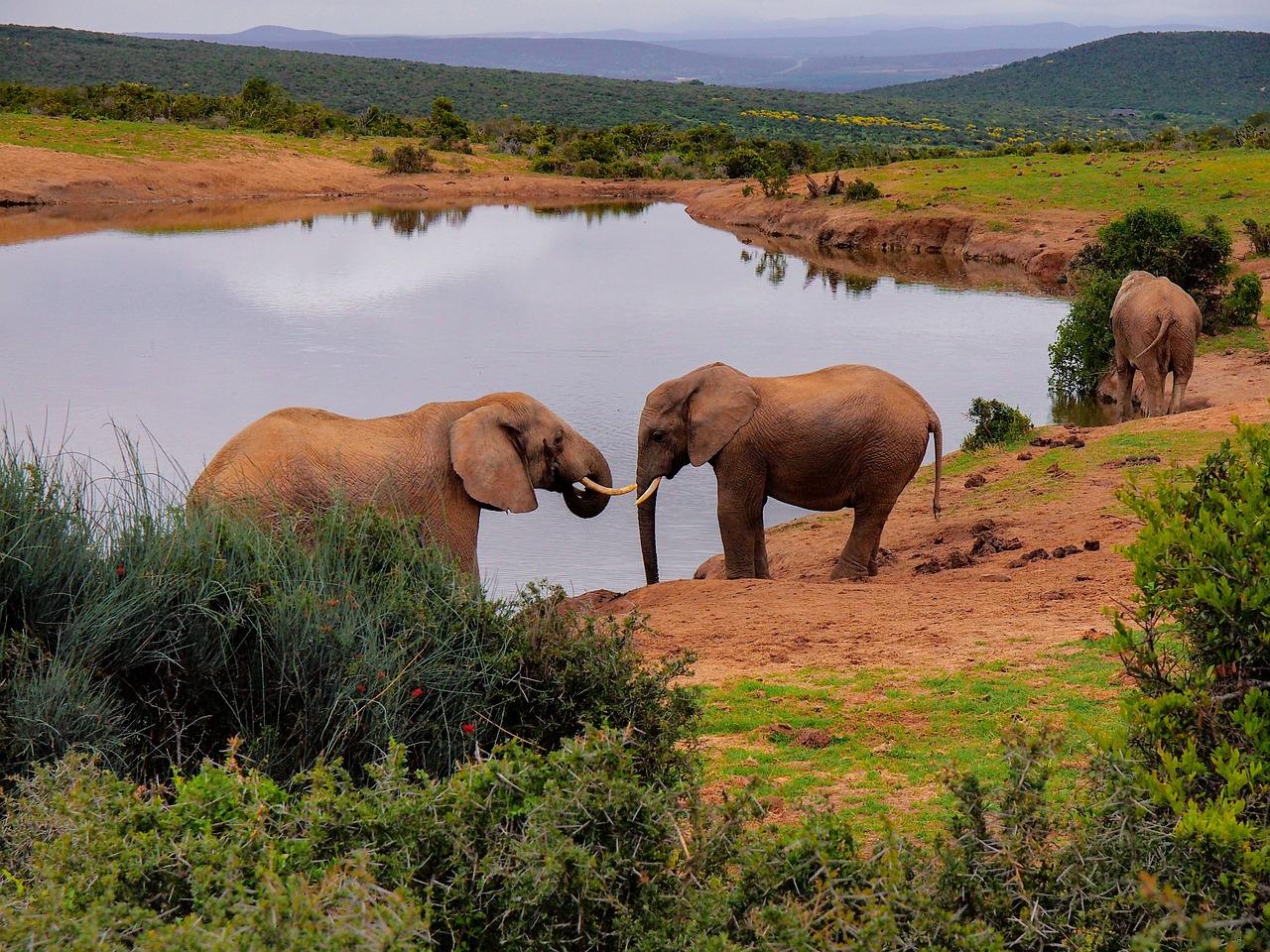 актуален для обитатели и природа в африке фото карандашом время процедуры чувствовалось