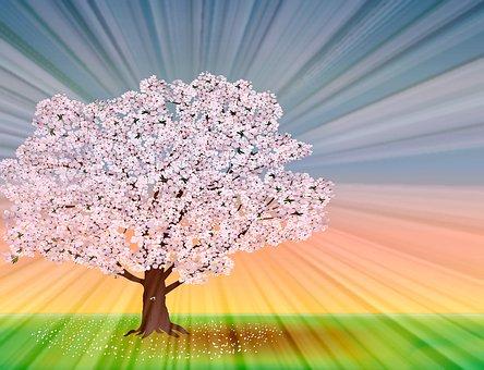 50 Free Sakura Tree Sakura Illustrations Pixabay