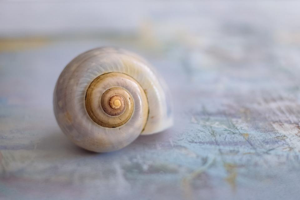 Caracol, Cáscara, Shell, Cerrar, Espiral, Fondo
