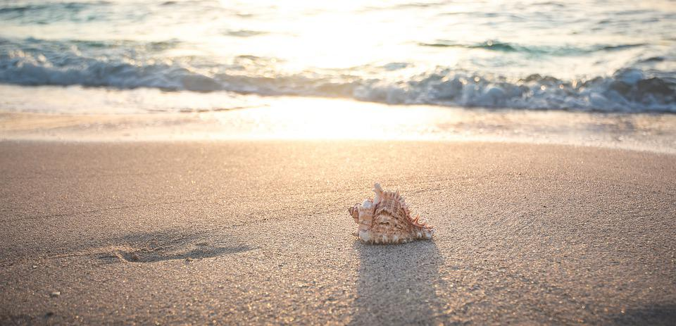 Beach, Shell, Sea, Vacations, Sand, Nature, Summer