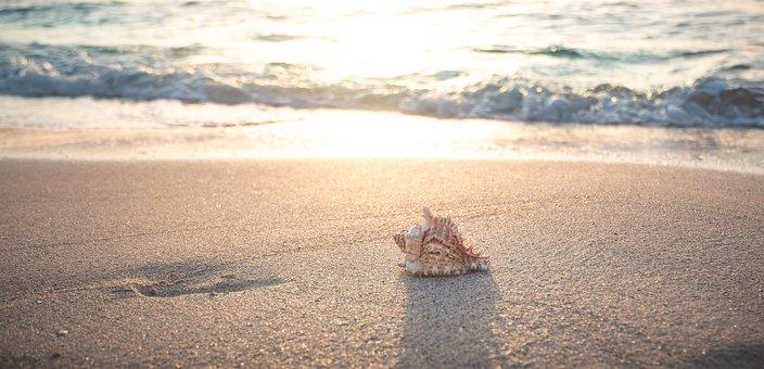 Beach, Shell, Sea, Vacations, Sand