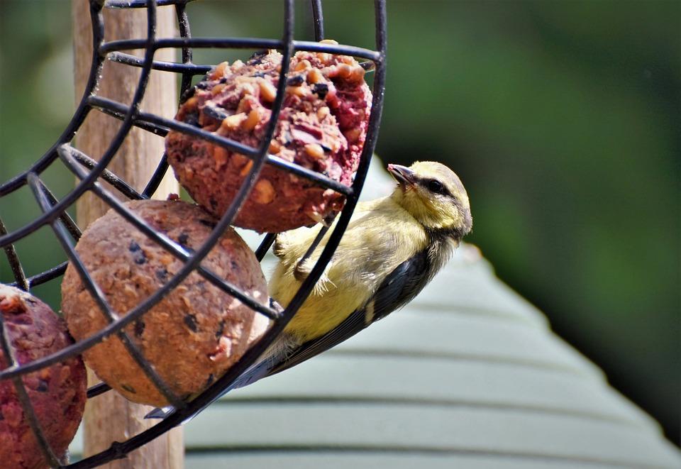 防範入冬禽流感疫情 屏縣加強養禽場監控及消毒