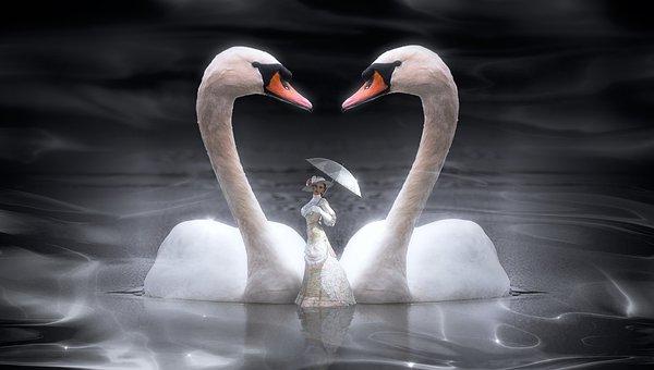 100 Free Swan Bird Illustrations Pixabay