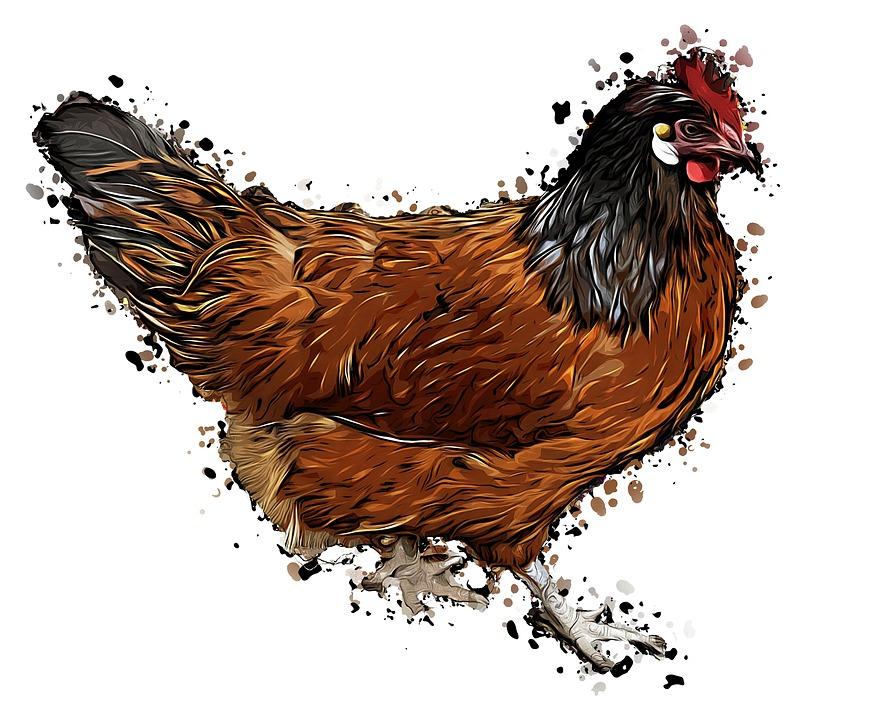 Poulet Des Animaux Cartoon Image Gratuite Sur Pixabay