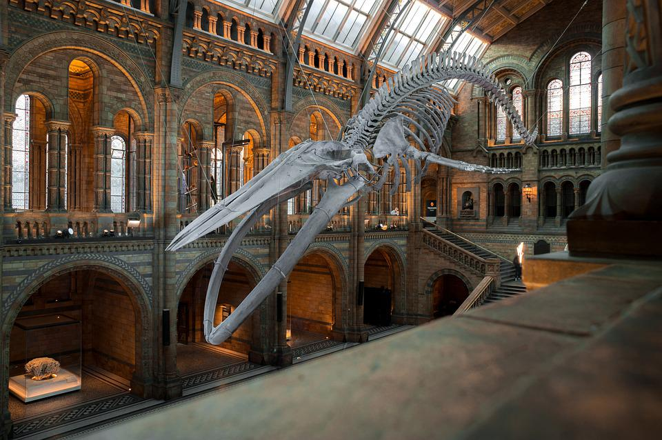 National History Museum, Londres, Uk, Wal, Squelette