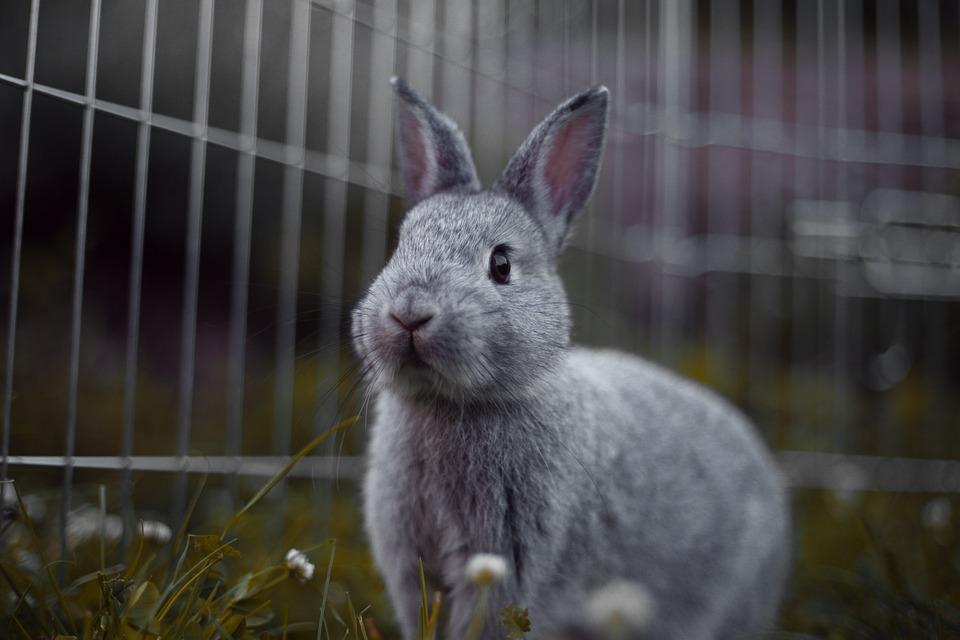Konijn Knaagdieren Zoogdier - Gratis foto op Pixabay