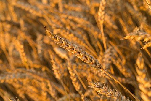 В Курской области фермерами произведена пятая часть сельхозпродукции на 35 млрд рублей