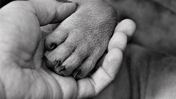 Hand, Woman, Paw, Dog, Finger, Claw