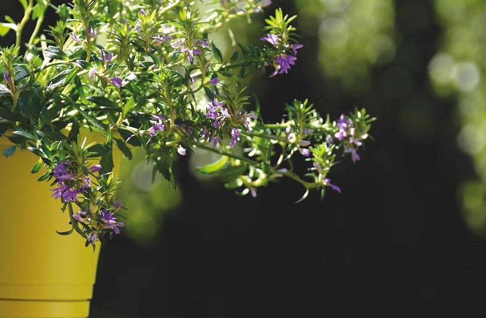 Bloemen In Pot.Bloemen Pot Tuin Blauwe Bloem Gratis Foto Op Pixabay