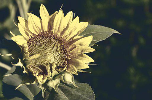 Unduh 72+ Background Hijau Sinar Matahari HD Gratis