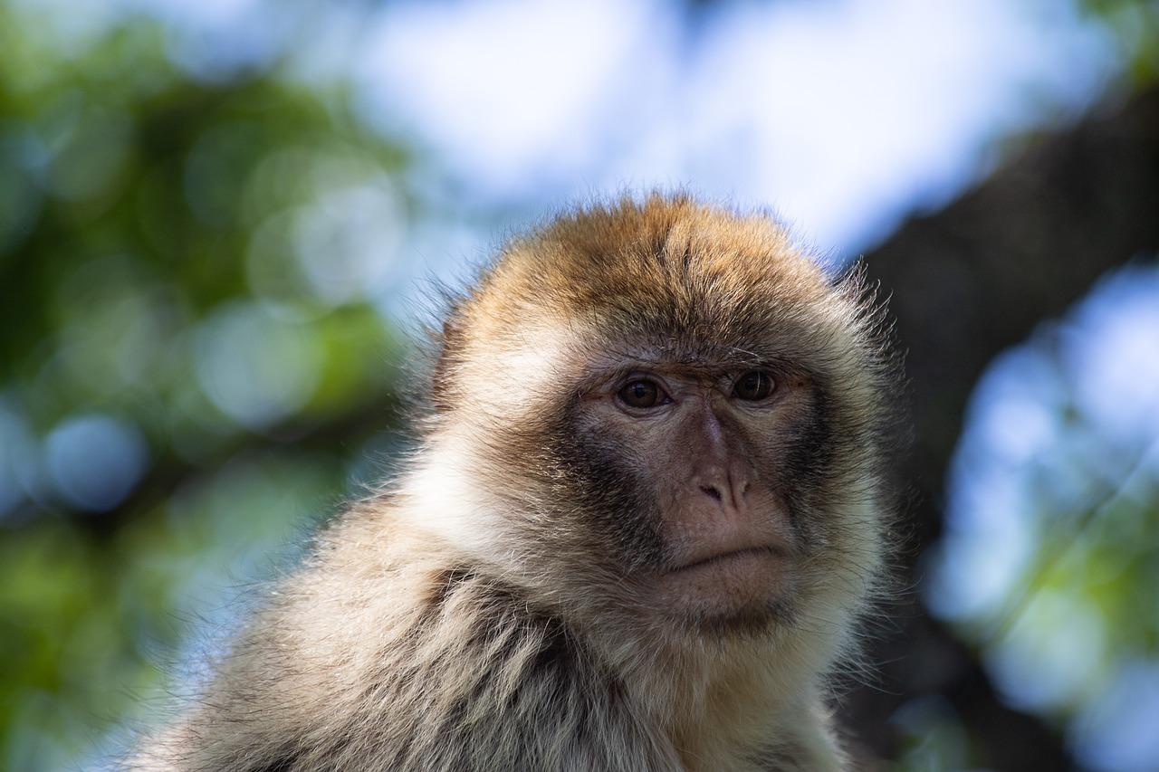 Улыбающаяся обезьянка картинки такая кукла
