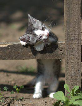 Cat, Small, Playful, Adorable, Tamed