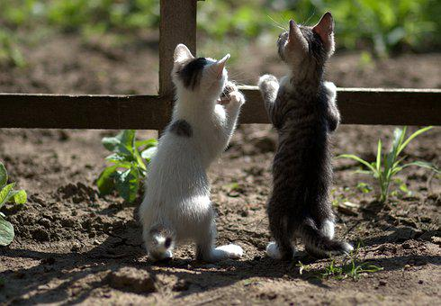 Cats, Small, Playful, Adorable, Tamed