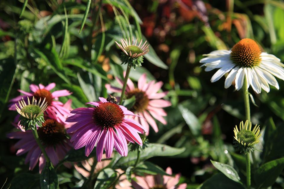 Bijen Oase