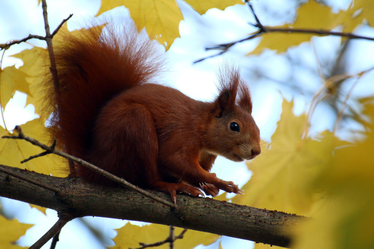 фото белки на дереве осень тема клипа чувство