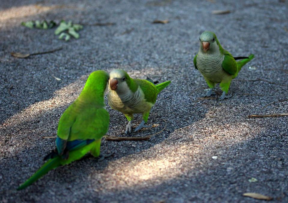 60+  Gambar Burung Mewarnai HD Paling Bagus Free