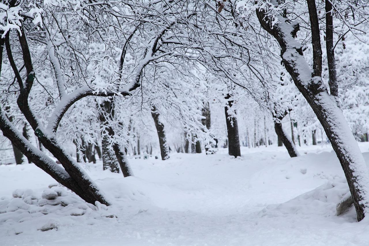 ロシアの冬 白い雪 雪に覆われた木々 - Pixabayの無料写真