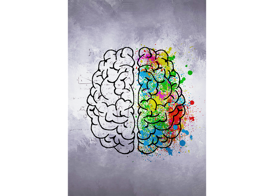 картинки на полушария мозга с цветами