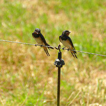1a6166a6b83d6 300+ Free Swallows & Swallow Images - Pixabay