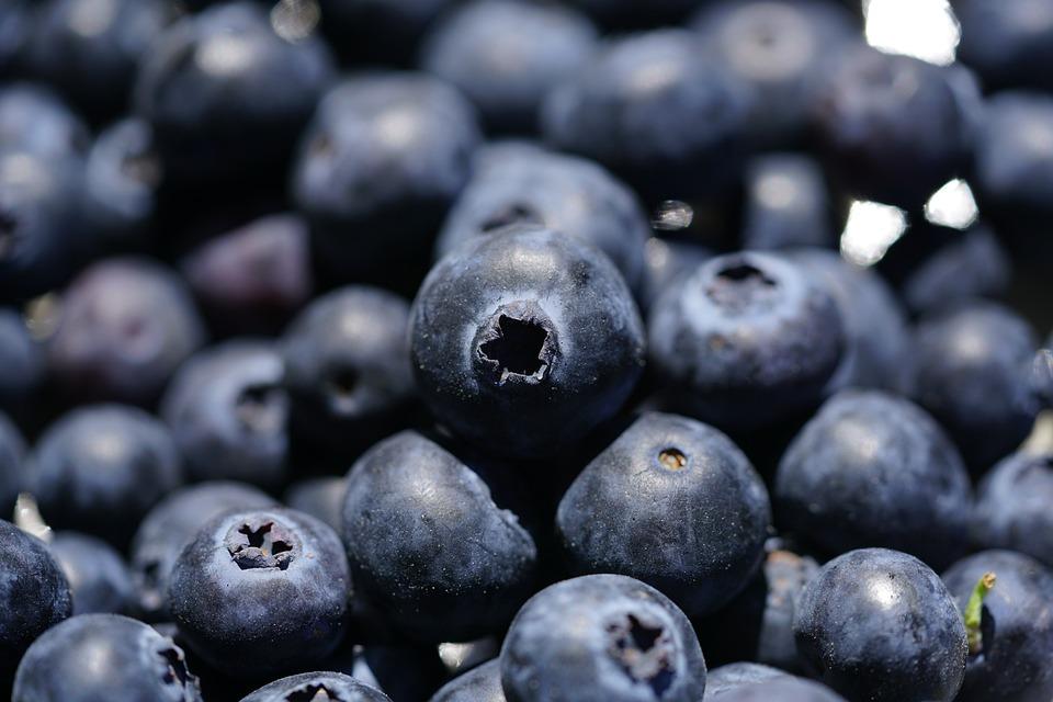 Bleuet, Vaccinium Myrtillus, Baies, Bleu Foncé