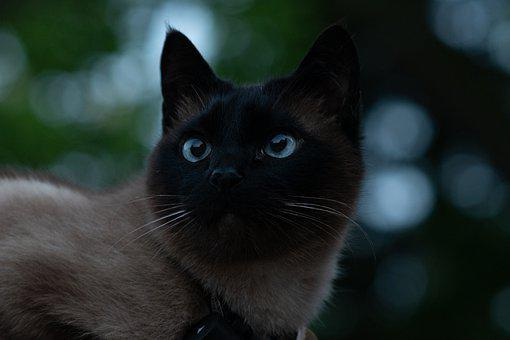 Len tuk čierna mačička