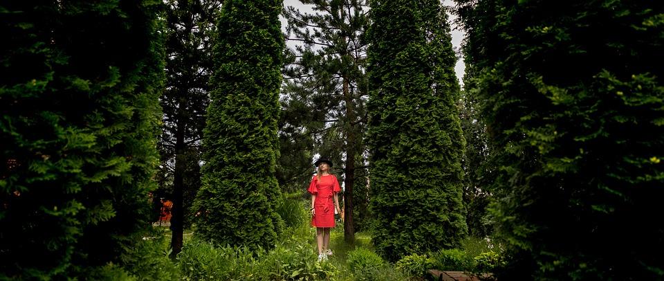 Thuja, Forest, Garden, Red Dress, Park, Background
