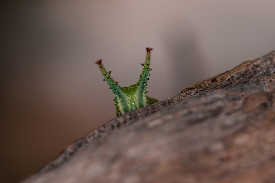 Eyes Nature Caterpillar - Free photo on Pixabay