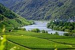 mosel, rzeka, winnice