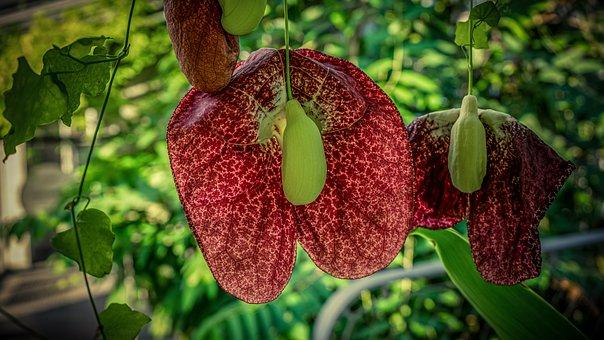 Plus de 300 images de Fleurs Tropiques et de Fleur - Pixabay