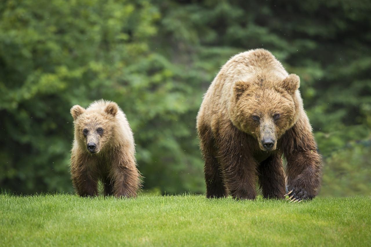 Фото с медвежонком живым