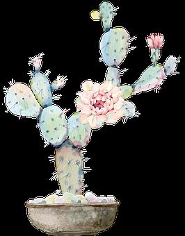 Cactus, Déchiré, Vert, Fleur