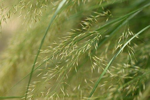 1,000+ Free Blade Of Grass & Grass Images - Pixabay