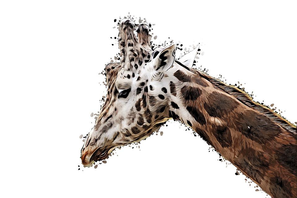 Girafe Dessin Des Animaux Image Gratuite Sur Pixabay
