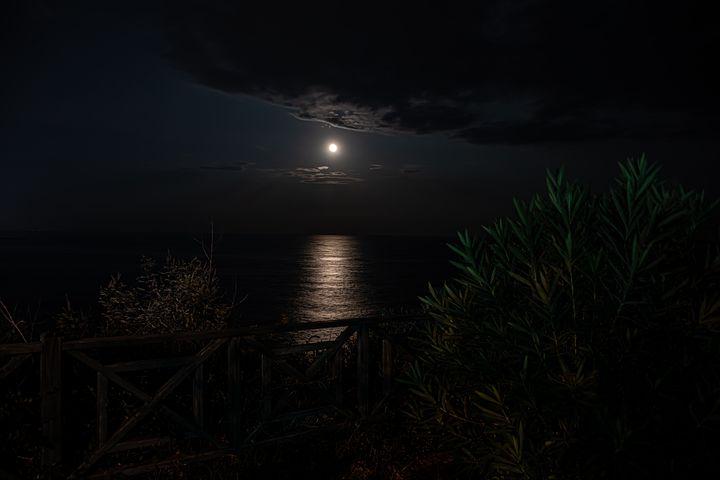 Лунная ночь фотографии ягоды можно
