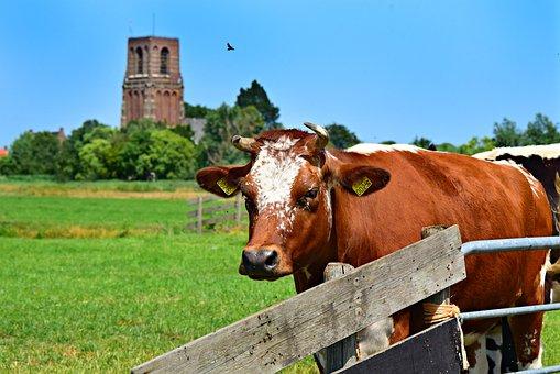 Микроводоросли - подходящий белок для коров