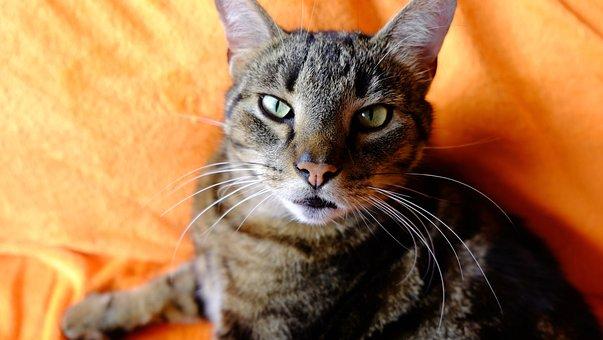 červená hlava dívka kočička