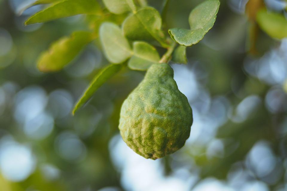 Bergamot, Green, Nature, Fruit, Herb, Food