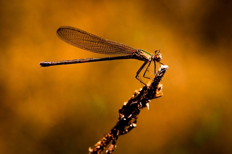 Invertebrados-insectos