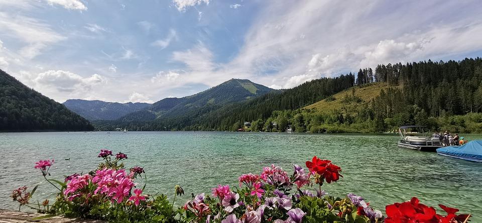 Fiori Lago Natura Foto Gratis Su Pixabay