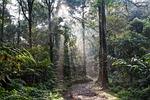 krajobraz, tropikalny las, lane
