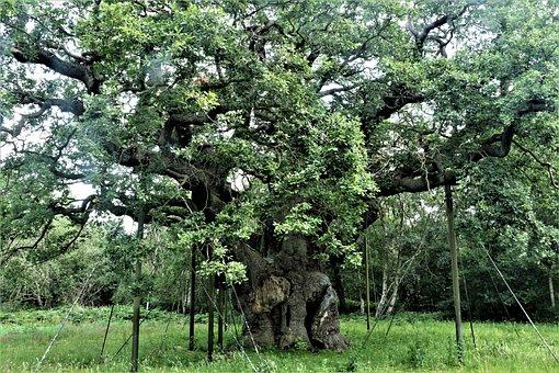 Tree, Robin Hood, Landscape, England