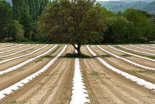 Agricultura, La Agroecología, Espárragos