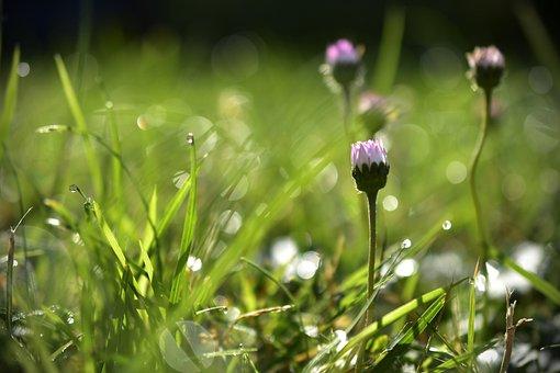 Wiese, Gras, Tau, Morgentau