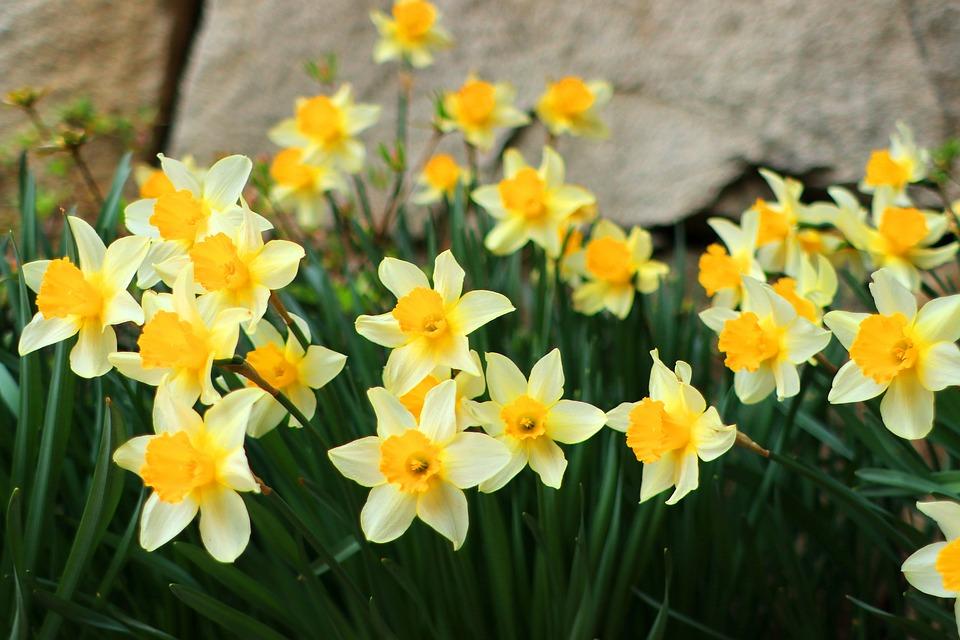 Bunga Tanaman Liar Musim Foto Gratis Di Pixabay